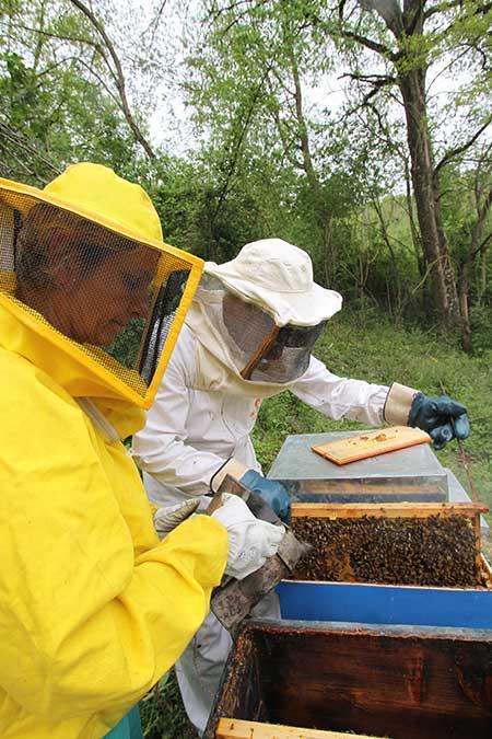 produzione-miele-biologico-costacciaro-gubbio